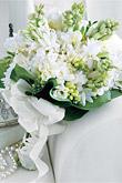 Kvety, kvietky, kvetinky... - Obrázok č. 25