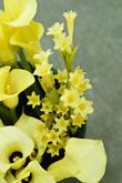Kvety, kvietky, kvetinky... - Obrázok č. 27