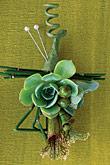 Kvety, kvietky, kvetinky... - Obrázok č. 31