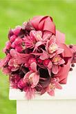 Kvety, kvietky, kvetinky... - Obrázok č. 32