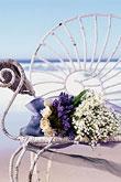 Kvety, kvietky, kvetinky... - Obrázok č. 38