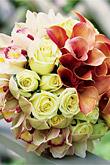 Kvety, kvietky, kvetinky... - Obrázok č. 39