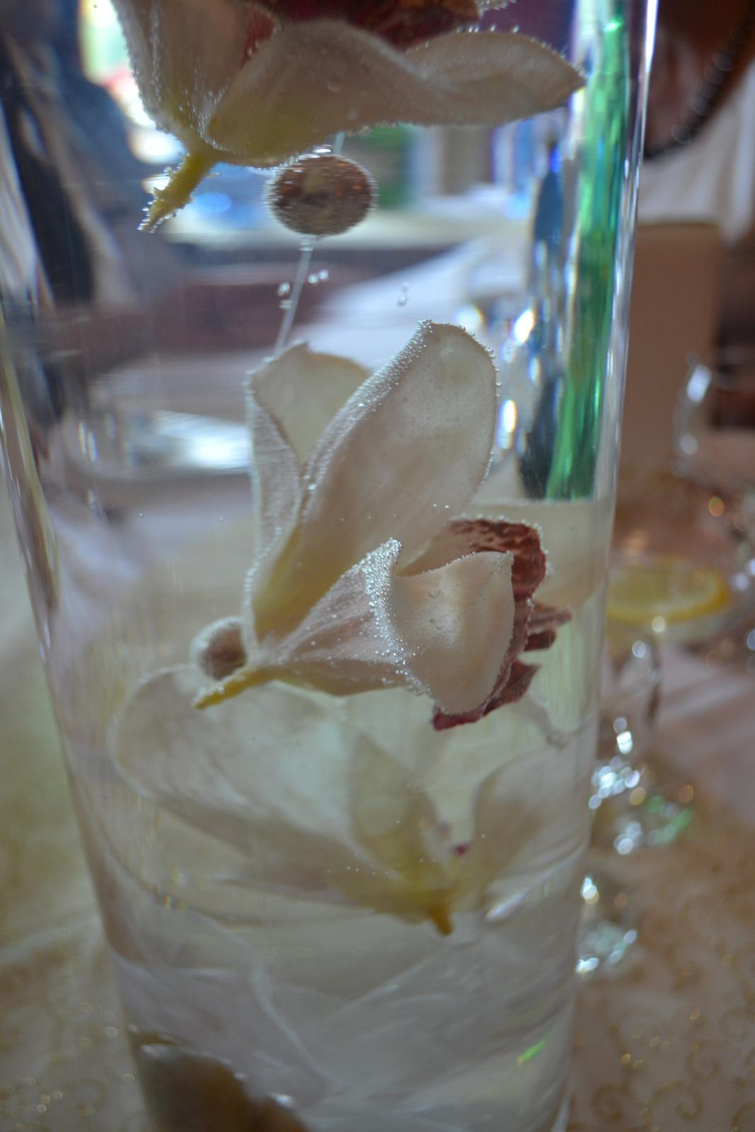 @soro88 nase orchidee boli... - Obrázok č. 1