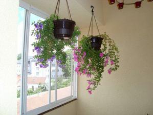 balkonové kvítí