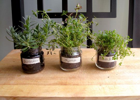Recyklované a iné nápady ♻ - bylinky do kuchyne