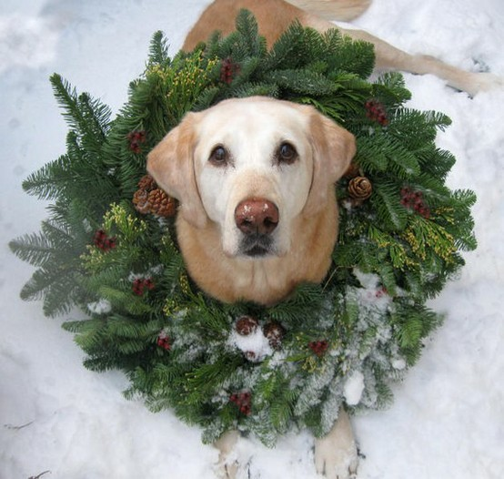 Natural christmas (aké dekorácie si môžeš vyrobiť sama:) ☃ - Obrázok č. 411