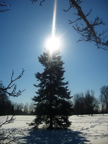 Natural christmas (aké dekorácie si môžeš vyrobiť sama:) ☃ - NATURAL :)
