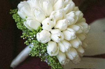 tulipany, jednoduche a biele