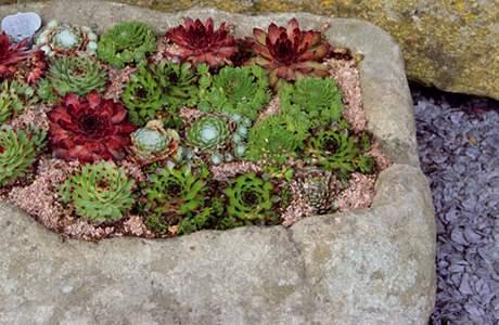 Kouzelná zahrada - Obrázek č. 14