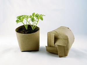 Pěstování sazeniček