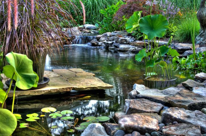 Voda v záhrade - Obrázok č. 164
