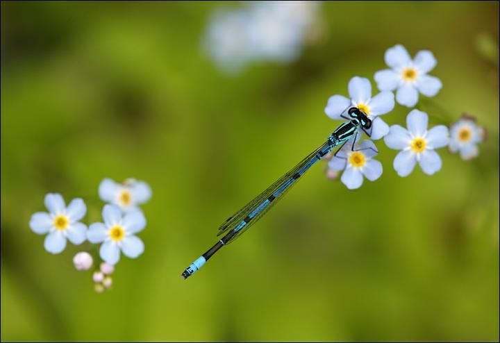Voda v záhrade - šidielko