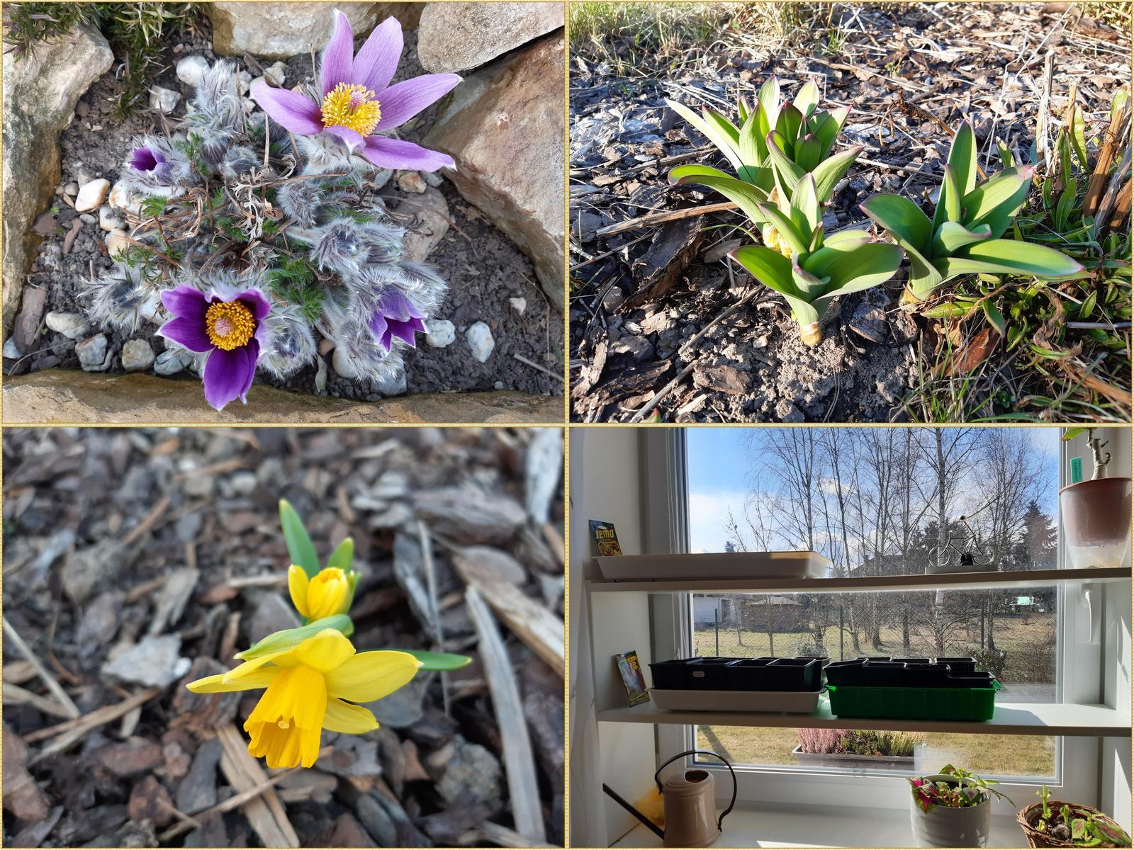 Zahrada 2021 - jaroooo