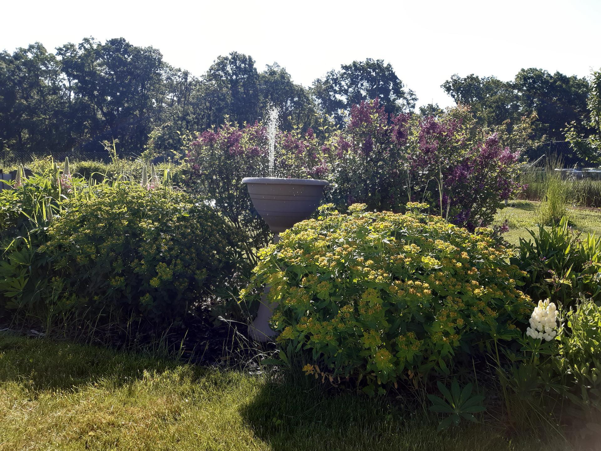 Zahrada 2021 - taková ptákovina a kolik to udělá radosti, když člověk dřepí už rok na home office :-D