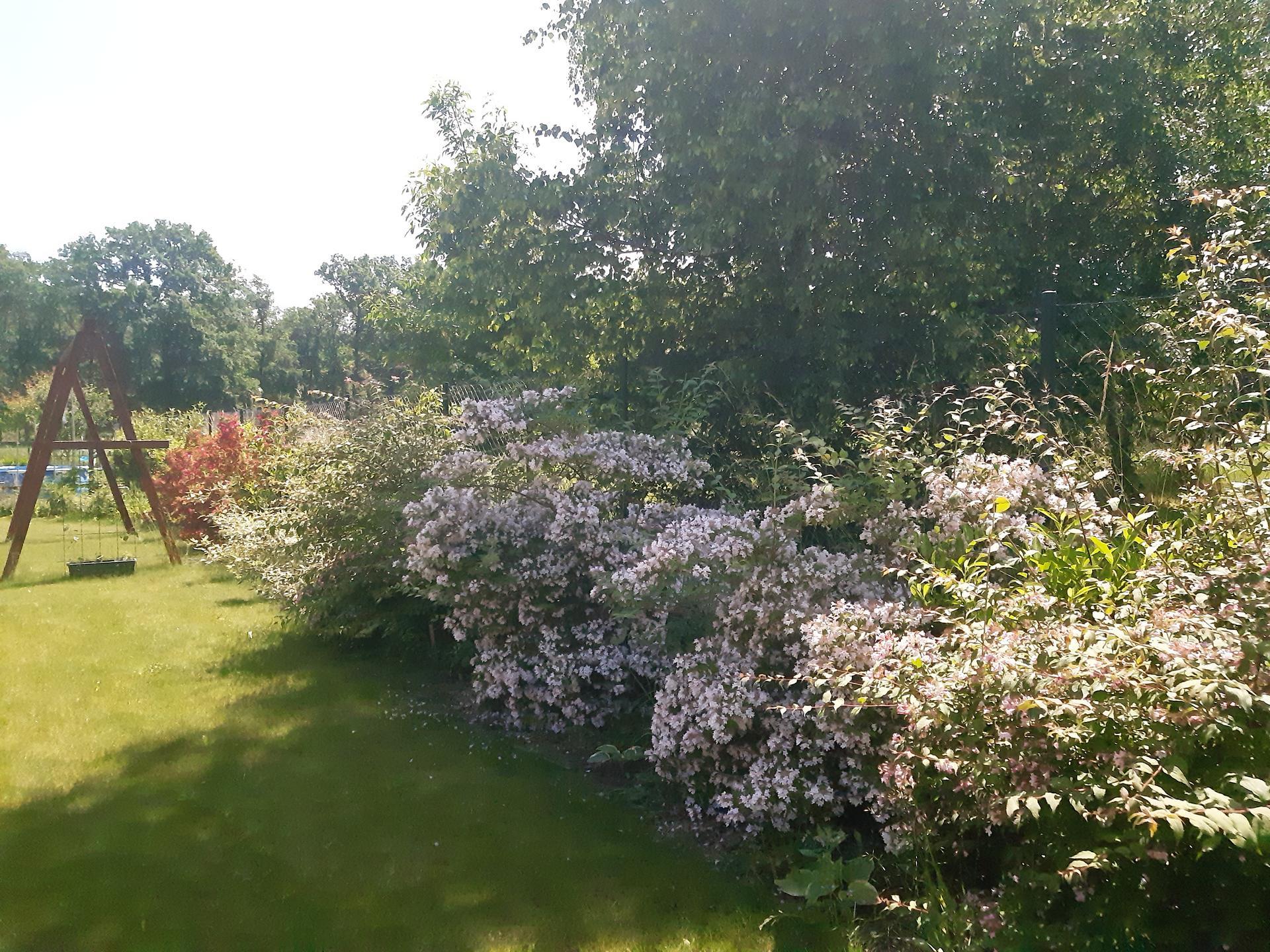 Zahrada 2021 - kvetoucí živý plot konečně vykvetl ;-)