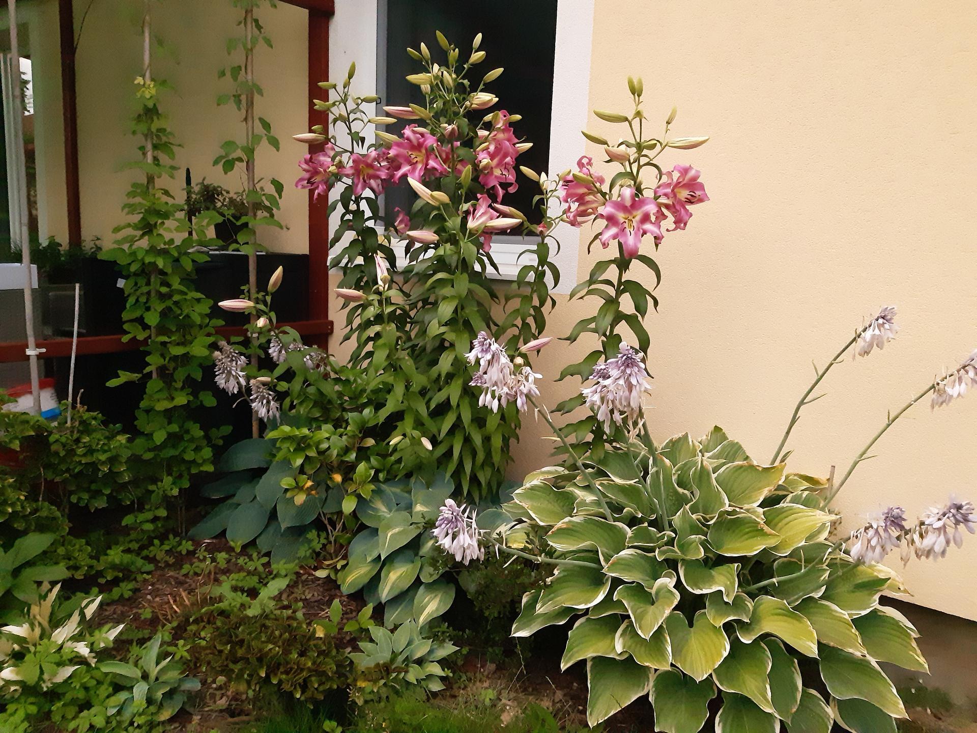 Zahrada 2021 - džungle ve stínu u terasy. Mám tam málo host a moc plevele, na podzim to poladím ;-)