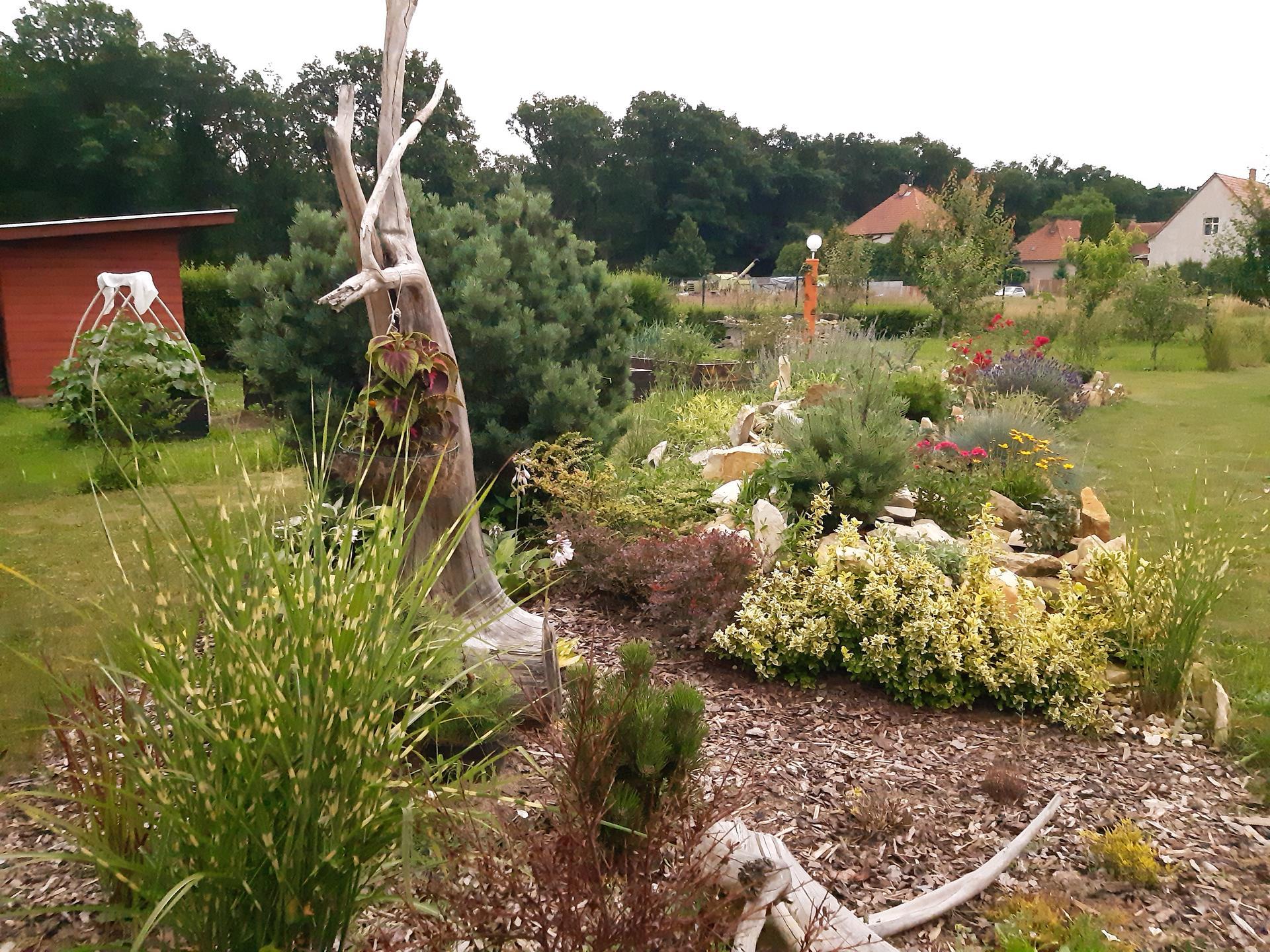 Zahrada 2021 - vřesoviště a skalka. Vřesy mi usychají, nemají žádnou péči a nedávají to. Co s nimi?