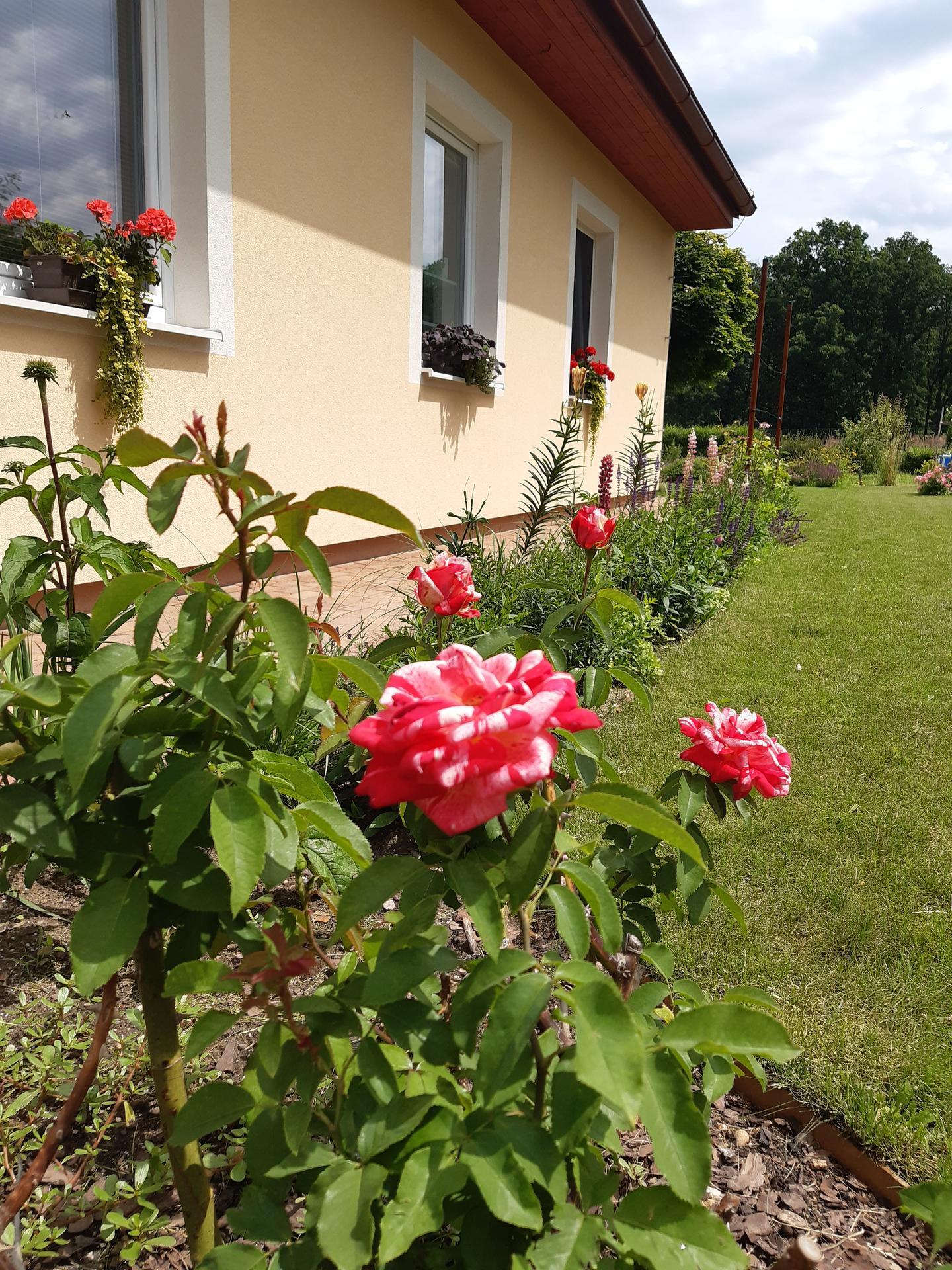 Zahrada 2021 - letos v dubnu založený záhonek před oknem