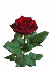 ...a svědkyně 3 rudé růže a okolo bílé chryzantémy... :-)