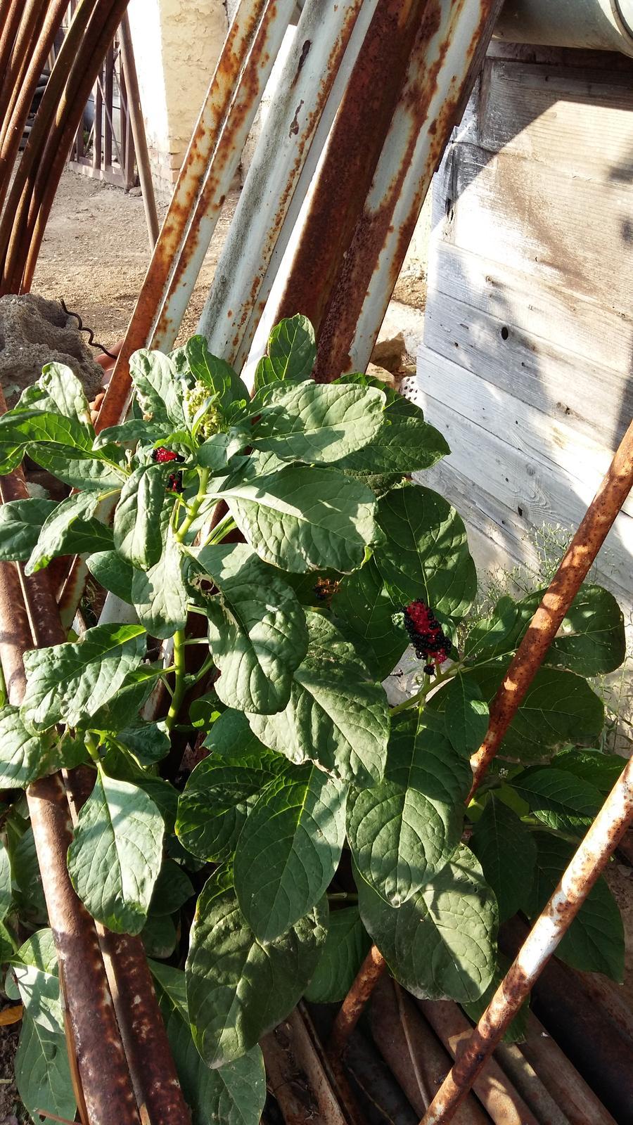 V zahrade mi rastie... - Obrázok č. 1