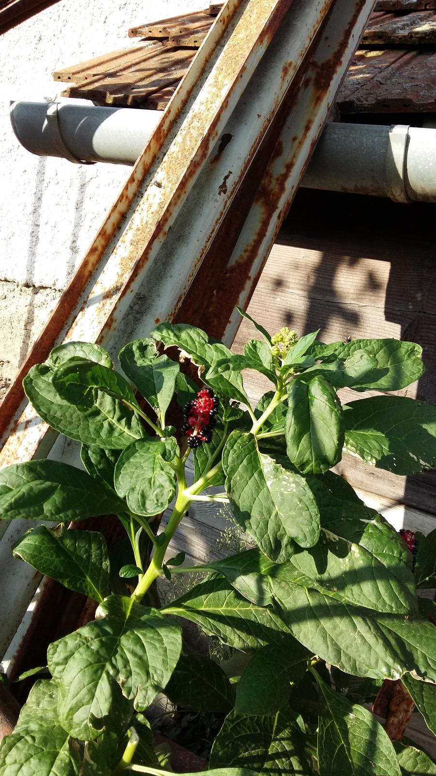 V zahrade mi rastie... - Obrázok č. 2