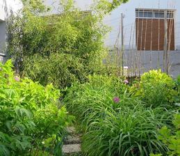 2014 - Paličky napravo sú čerstvé bambusové výhonky z jedného uniknutého rizómu. Celkovo sa z prázdnej záhradky v priebehu dvoch rokov stala džungľa. :)