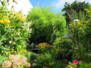 Bambus podrástol, suseda už nevidno.