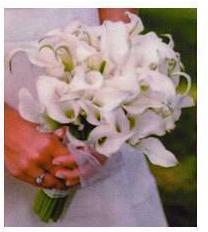 Nasa svadba - takato len ruzova,alebo este uvazujem nad ruzovymi tulipanmi