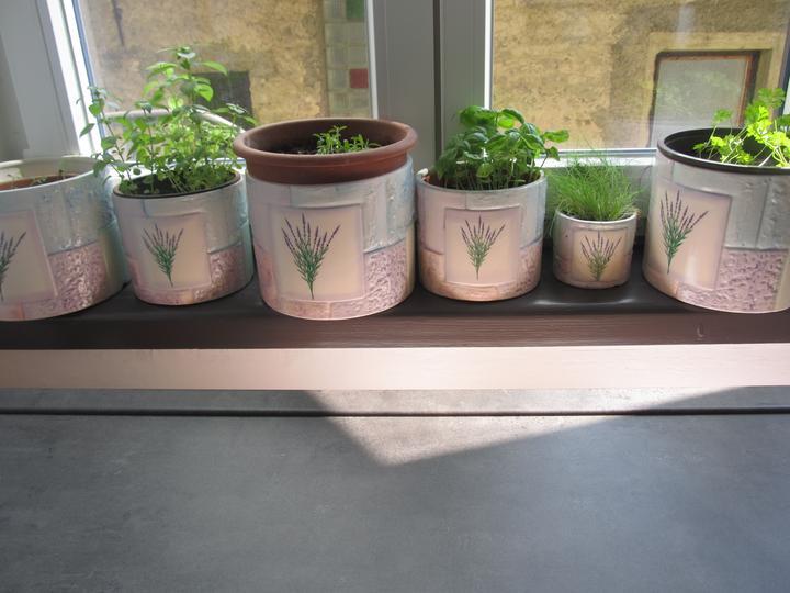 Naše bydlení - Pěstujeme bylinky :-)