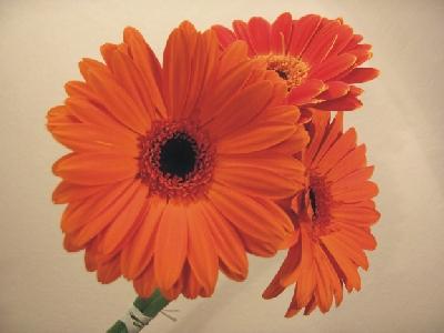 Svadobne kytice - Obrázok č. 57