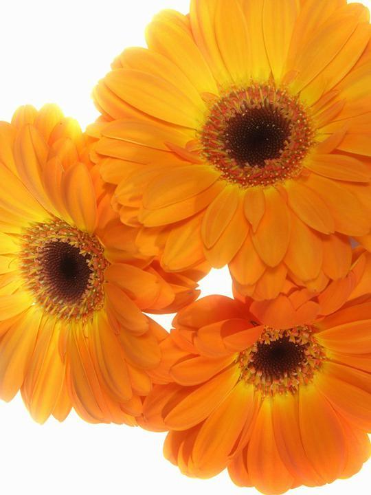 Svadobne kytice - Obrázok č. 56