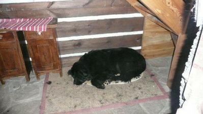 pod schodami ma pelech nas pes