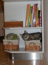 kdyby někdo hledal naši kočku, tak je v poličce vedle utěrek pod kuchařkama :-)