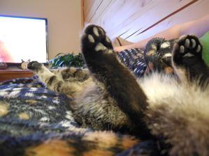 sledujeme TV