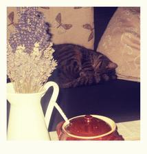 odpočinek po náročné noci - lov myší