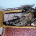 Chtěla bych se mít jako naše kočka v postýlce pro panenky :-)