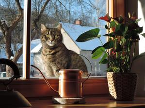 Žárlivec za oknem