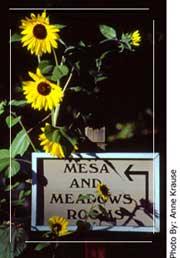 Kvety - Obrázok č. 11