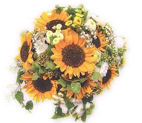 Kvety - Obrázok č. 14