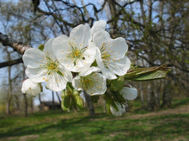 Kvety - Obrázok č. 41