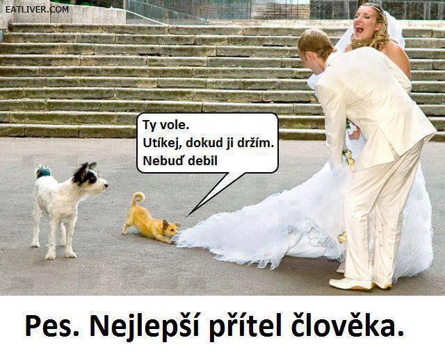 Svatební vtípky - Obrázek č. 1