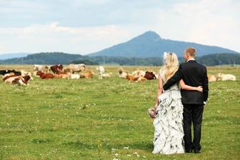 A realita. S ženichem a stádem krav :).