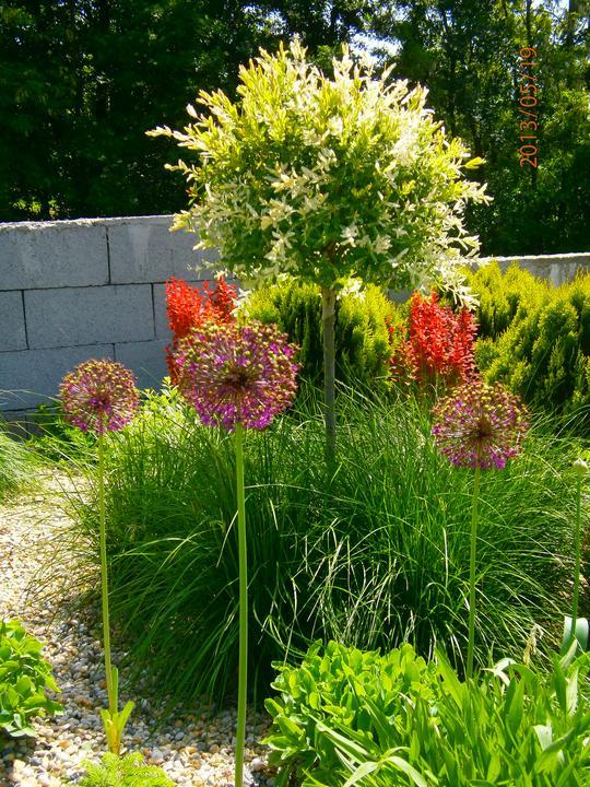 Moderná záhrada - Obrázok č. 18