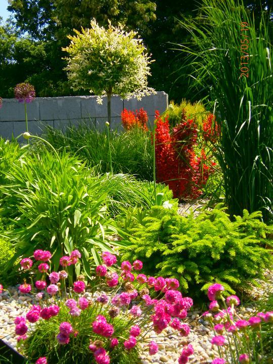 Moderná záhrada - Obrázok č. 19
