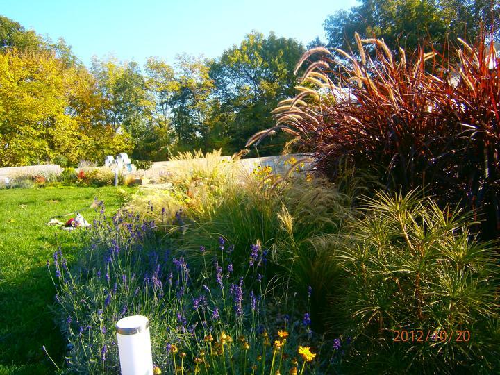 Moderná záhrada - Obrázok č. 23