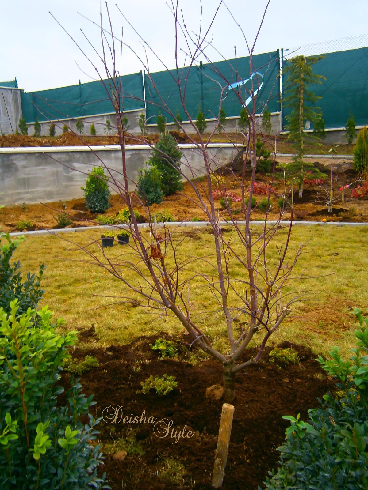 Záhrada vo svahu - Obrázok č. 24