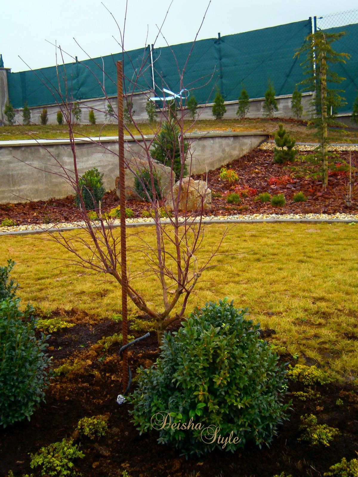 Záhrada vo svahu - Obrázok č. 45