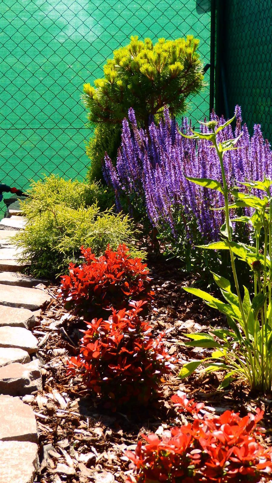 Záhrada pre oddych - Obrázok č. 35