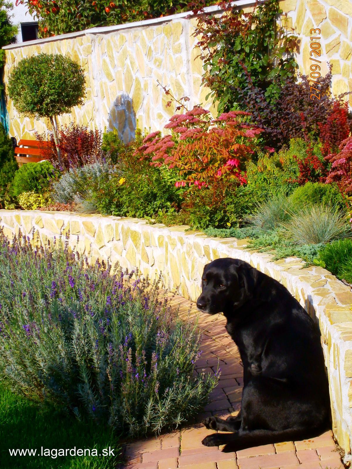 Stredomorská záhrada - Obrázok č. 7