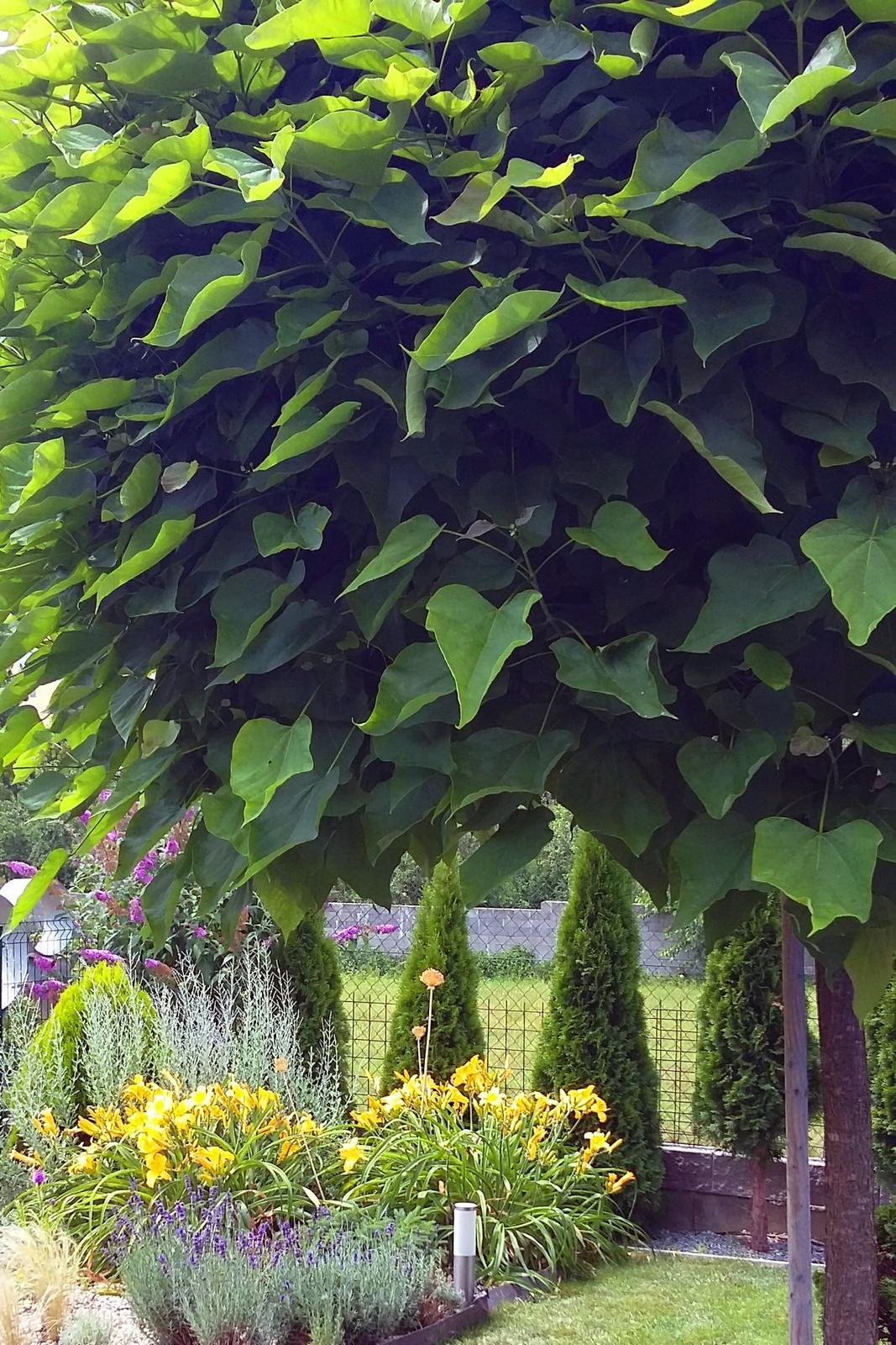 Moderná záhrada - Obrázok č. 24